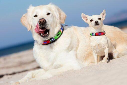 Afrikanske Perlehalsbånd til hunde Rafiki Blue